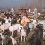 Çoban Heykeli