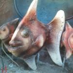 Fiber Balık Fıskiye