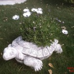 Kaplunbağa Çiçeklik