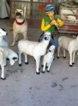 Öne Bakan Koyun Maketi