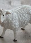 Kıbrıs Küçük Koyun Heykeli