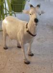 Kıbrıs Keçi Maketi