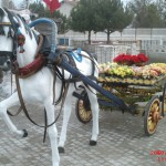 Kır At Arabası Koşumlu