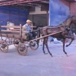 Kır At Arbası (2)