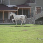 Kır At Figürü