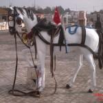 Kır At Koşumlı