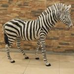 Zebra Biblo