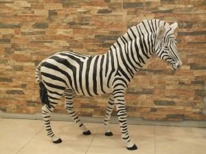 Zebra Bibloları