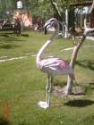 Flamingo Maketi