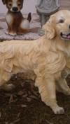 Golden Köpek Heykeli