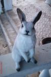 Uzun Kulaklu Tavşan Heykeli