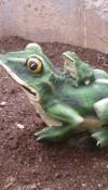 Yavrulu Kurbağa Heykeli